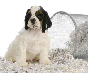 dog proof bathroom garbage bin