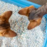 How to Dispose of Cat Litter? - Systemic Measures for Cat Owners