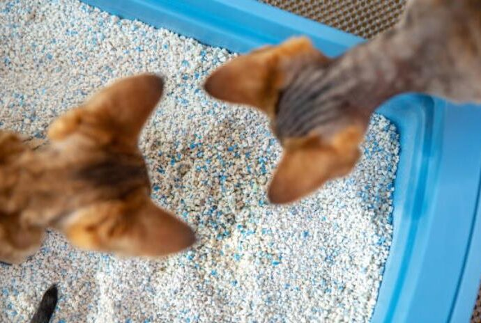 how to dispose kitty litter
